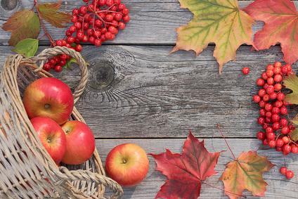 Go Tours Apple Orchard